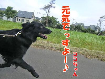 チャンスとティアラ+ココ-20120731-2-400.jpg