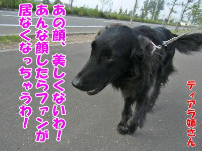 チャンスとティアラ+ココ-20120731-3-400.jpg