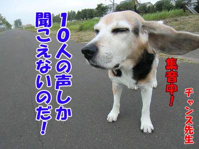 チャンスとティアラ+ココ-20120731-5-400.jpg