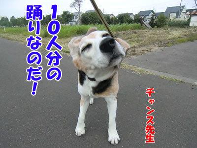 チャンスとティアラ+ココ-20120731-6-400.jpg