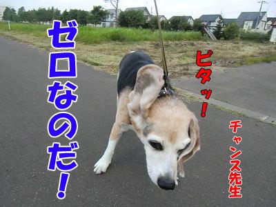 チャンスとティアラ+ココ-20120731-7-400.jpg