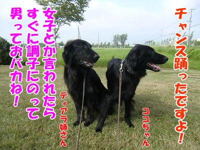 チャンスとティアラ+ココ-20120731-8-400.jpg
