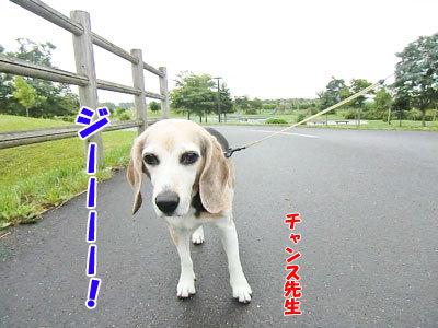 チャンスとティアラ+ココ-20120818-1-400.jpg