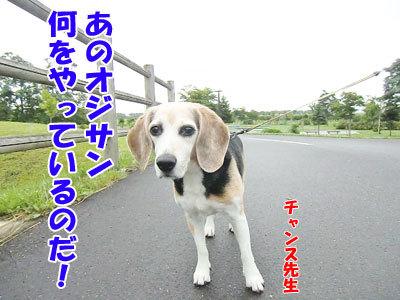 チャンスとティアラ+ココ-20120818-2-400.jpg