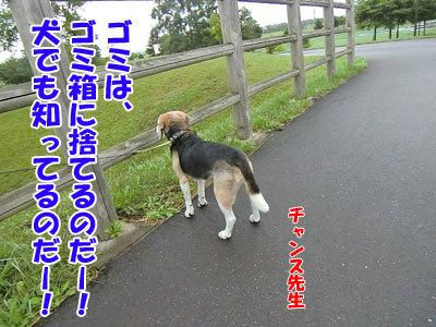 チャンスとティアラ+ココ-20120818-5-400.jpg