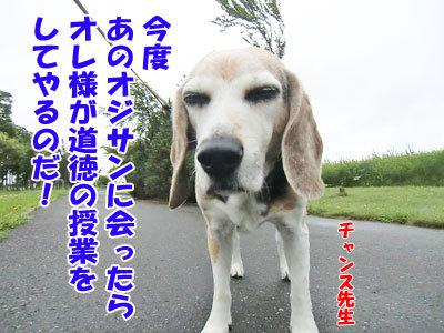 チャンスとティアラ+ココ-20120818-6-400.jpg