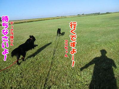 チャンスとティアラ+ココ-20120823-1-400.jpg