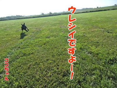 チャンスとティアラ+ココ-20120823-2-400.jpg