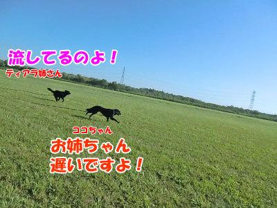 チャンスとティアラ+ココ-20120823-5-400.jpg