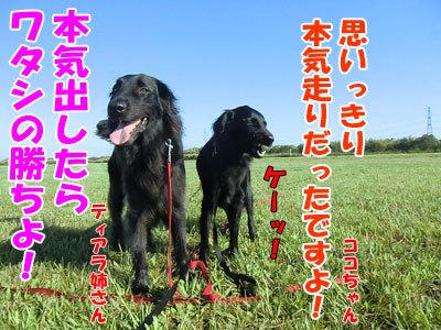 チャンスとティアラ+ココ-20120823-6-400.jpg