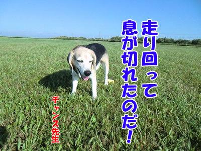 チャンスとティアラ+ココ-20120823-7-400.jpg