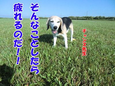 チャンスとティアラ+ココ-20120823-8-400.jpg