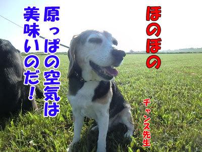 チャンスとティアラ+ココ-20120824-1-400.jpg