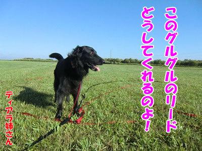 チャンスとティアラ+ココ-20120824-3-400.jpg