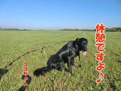 チャンスとティアラ+ココ-20120824-5-400.jpg