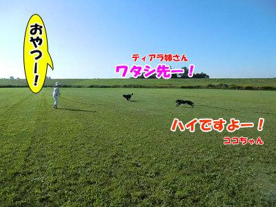 チャンスとティアラ+ココ-20120824-8-400.jpg