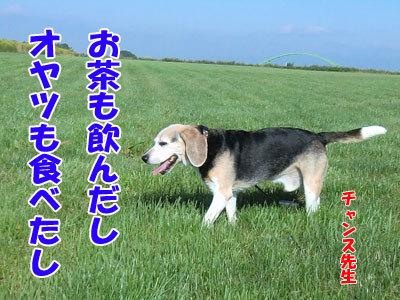 チャンスとティアラ+ココ-20120824-9-400.jpg