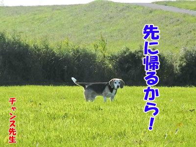 チャンスとティアラ+ココ-20120824-10-400.jpg