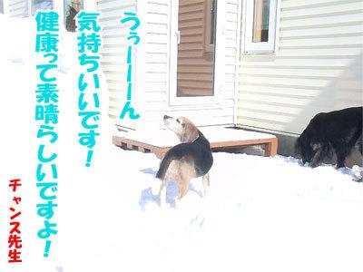 チャンスとティアラ+ココ-20110304-2-400.jpg