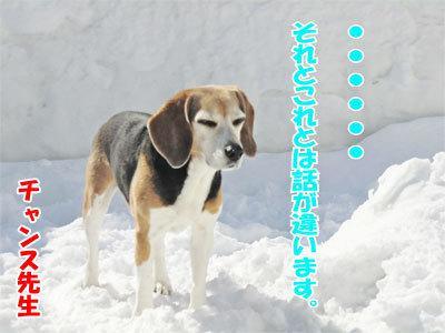 チャンスとティアラ+ココ-20110304-3-400.jpg