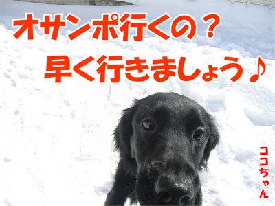 チャンスとティアラ+ココ-20110304-4-400.jpg