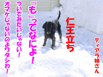 チャンスとティアラ+ココ-20110304-5-400.jpg