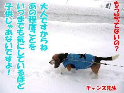 チャンスとティアラ+ココ-20110310-9-400.jpg