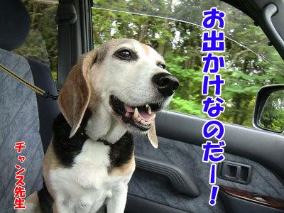 チャンスとティアラ+ココ-20120827-1-400.jpg
