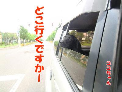 チャンスとティアラ+ココ-20120827-2-400.jpg
