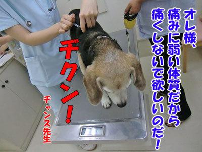 チャンスとティアラ+ココ-20120827-13-400.jpg