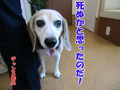 チャンスとティアラ+ココ-20120827-14-400.jpg