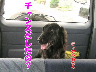 チャンスとティアラ+ココ-20120827-15-400.jpg