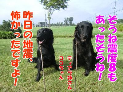 チャンスとティアラ+ココ-20120828-2-400.jpg