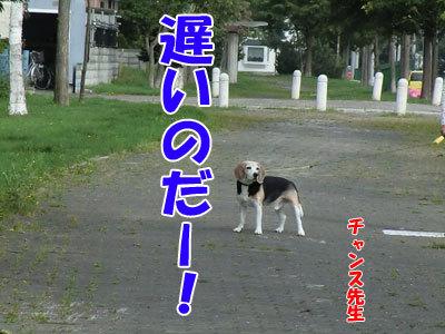 チャンスとティアラ+ココ-20120828-4-400.jpg