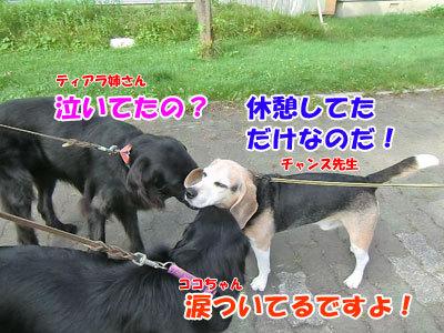 チャンスとティアラ+ココ-20120828-5-400.jpg