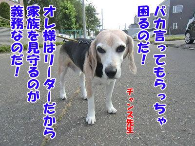 チャンスとティアラ+ココ-20120828-6-400.jpg