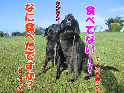 チャンスとティアラ+ココ-20120829-2-400.jpg