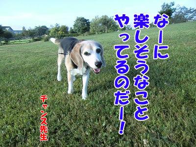 チャンスとティアラ+ココ-20120829-6-400.jpg