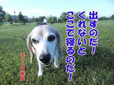 チャンスとティアラ+ココ-20120829-8-400.jpg