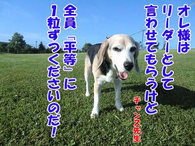 チャンスとティアラ+ココ-20120829-11-400.jpg