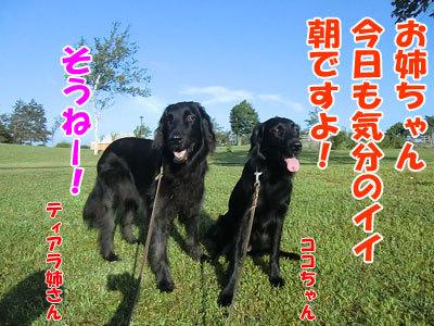 チャンスとティアラ+ココ-20120830-1-400.jpg
