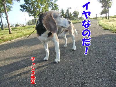 チャンスとティアラ+ココ-20120830-6-400.jpg
