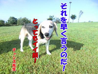チャンスとティアラ+ココ-20120830-7-400.jpg