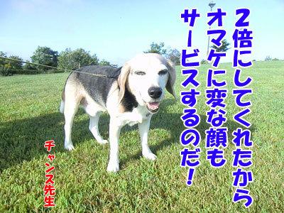 チャンスとティアラ+ココ-20120830-8-400.jpg