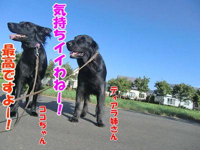 チャンスとティアラ+ココ-20120831-1-400.jpg