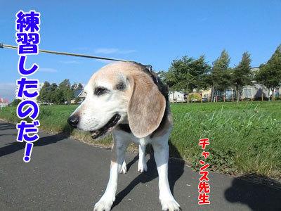 チャンスとティアラ+ココ-20120831-2-400.jpg