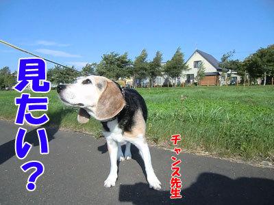 チャンスとティアラ+ココ-20120831-3-400.jpg