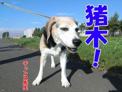 チャンスとティアラ+ココ-20120831-4-400.jpg