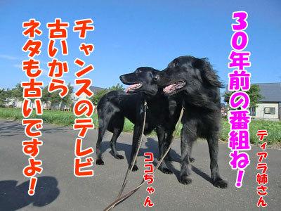 チャンスとティアラ+ココ-20120831-5-400.jpg