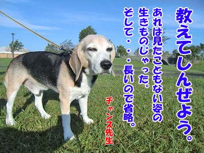 チャンスとティアラ+ココ-20120921-7-400.jpg